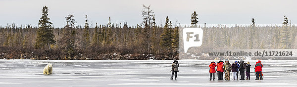 A group of wildlife viewers looking at a polar bear sitting on the ice  Dymond Lake  Manitoba  Canada