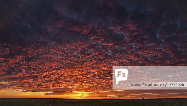 'Dramatic pink clouds in sunset; Herschel  Saskatchewan  Canada'