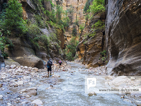 'Hikers make their way through the Virgin River Narrows  a majestic portion of one of America's most famous national treasures  Zion National Park; Utah  United States of America'