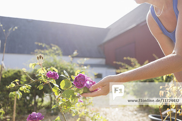 Woman touching flower in garden Woman touching flower in garden