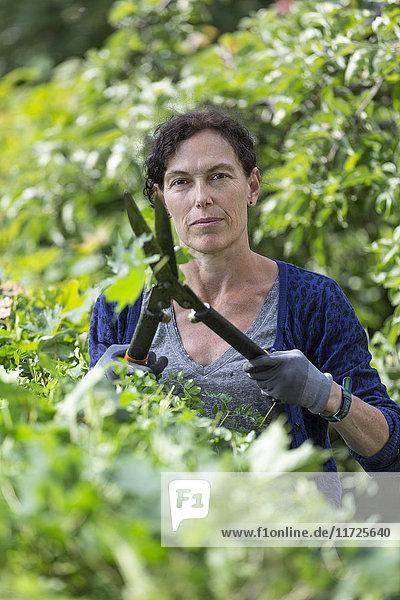 Woman pruning hedge