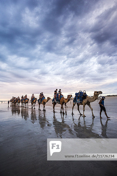 Cable Beach  Western Australia. Camels on the shore at sunset