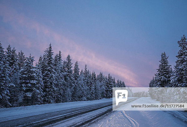 Remote winter road through snow covered forest trees  Lapland  Finland