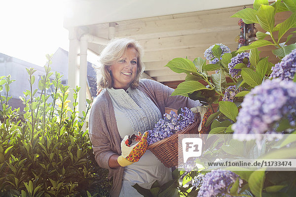 Portrait of mature woman in garden  holding basket of flowers
