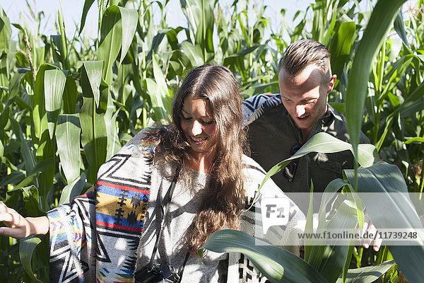 Couple exploring corn plants field