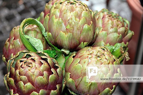 Artichokes  greengrocers stall in Trastevere is a typical district of Rome  Italy