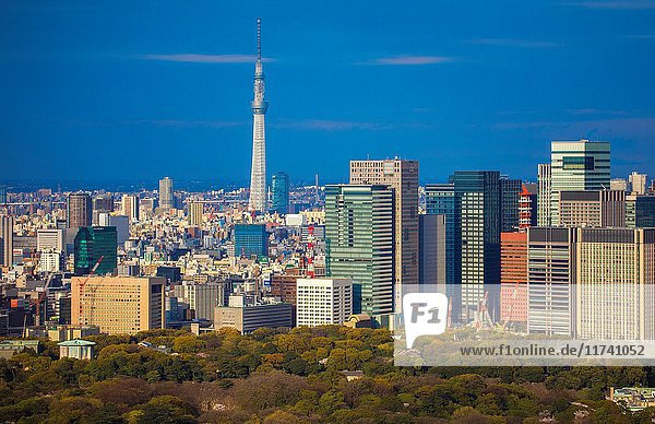 Japan  Tokyo City  Imperial Palace East Gardens  Otemachi Skyline  and Skytree Tower