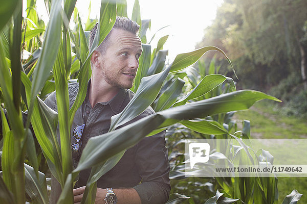 Mid adult man looking out from field of corn plants