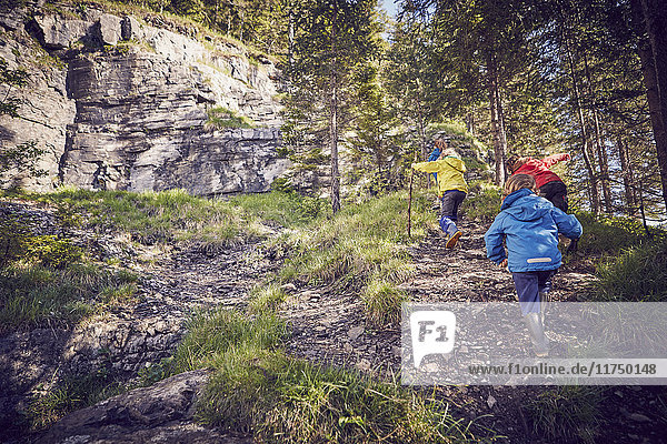 Group of children in forest  walking uphill  rear view