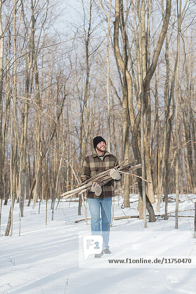 Mann sammelt Holz im Wald  Young's Point  Ontario  Kanada