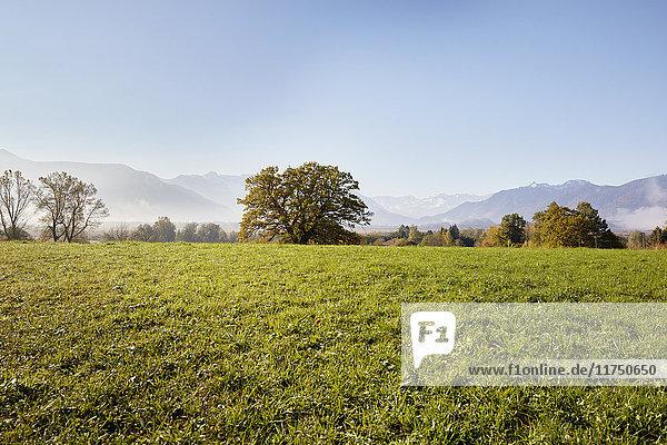 Landschaft mit Fernsicht auf das Murnauer Moos  Wettersteingebirge  Murnau  Bayern  Deutschland