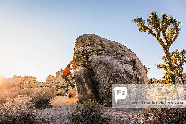 Male boulderer moving up boulder in Joshua Tree National Park at dusk  California  USA