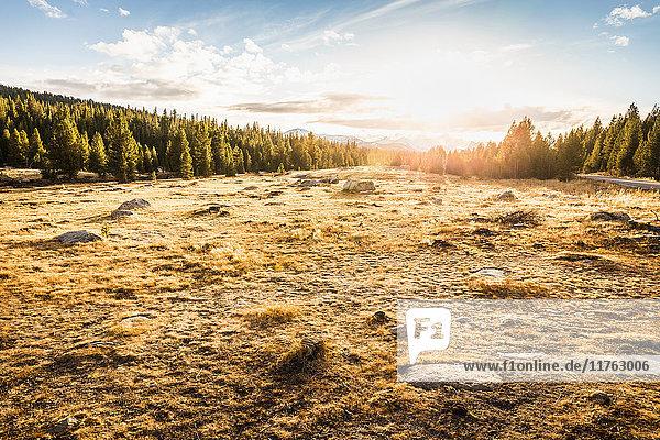 Wiese und Wald bei Sonnenuntergang  Yosemite National Park  Kalifornien  USA