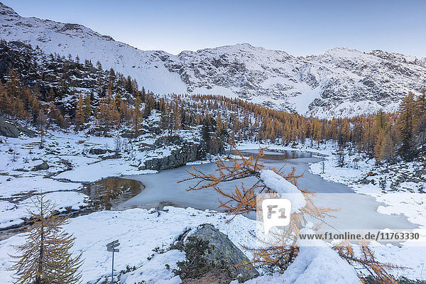 Red larches frame the frozen Lake Mufule  Malenco Valley  Province of Sondrio  Valtellina  Lombardy  Italy  Europe