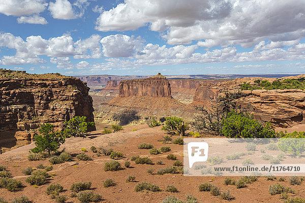 Canyonlands National Park  Moab  Utah  United States of America  North America