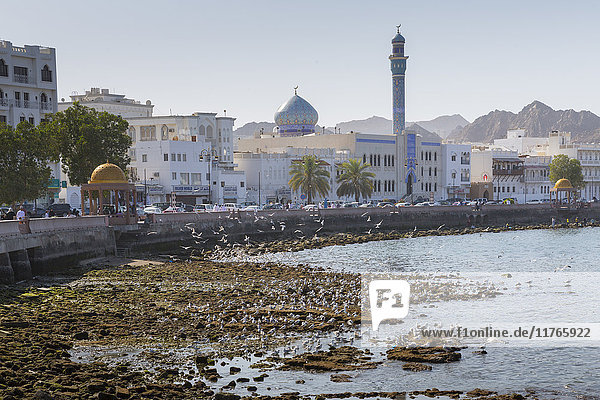 View of the Al Rasool Al Adham Mosque and Corniche at Muttrah  Muscat  Oman  Middle East