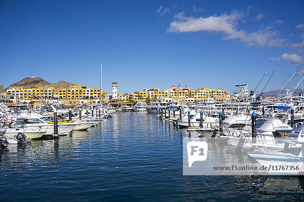Cabo San Lucas Marina  Baja California  Mexico  North America