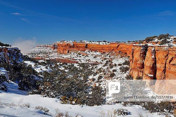 Junipers and snowy landscpe  Canyonlands National Park  Utah  USA.