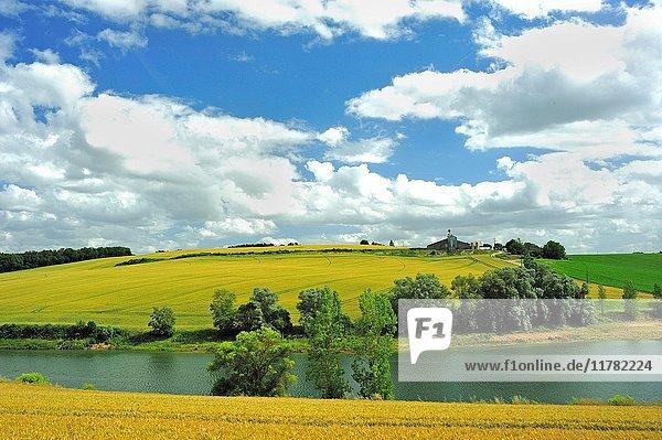 Wheat field near Laparade  Lot-et-Garonne Department  New Aquitaine  France.