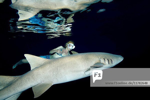 Young beautiful woman swims at night with a shark - Tawny nurse sharks (Nebrius ferrugineus)  Indian Ocean  Maldives.