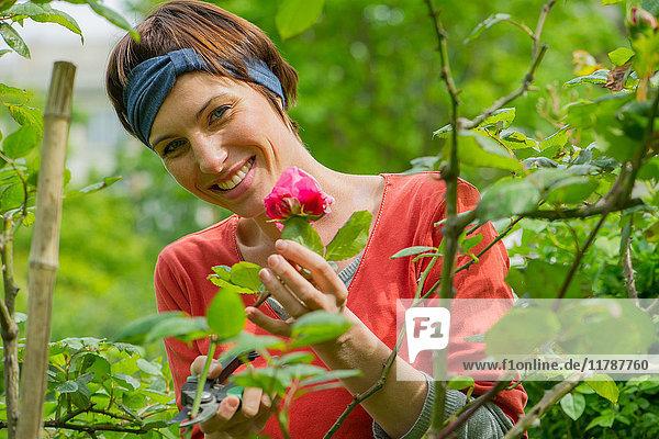 Frau  die zum Rosenstrauch im Garten neigt  Porträt