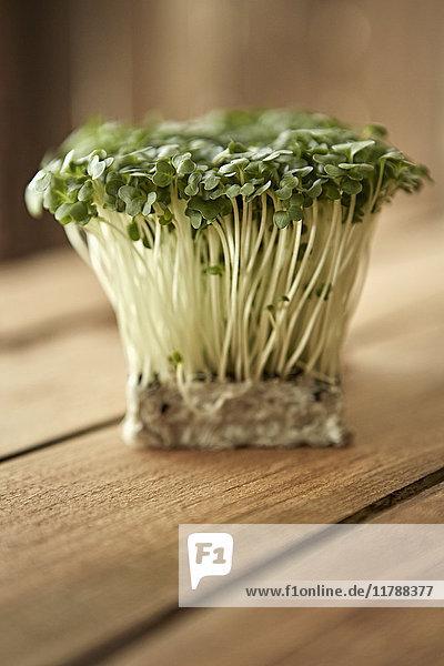 Stilleben hautnah frisch, biologisch, gesund grün kaiware daikon sprossen bunch