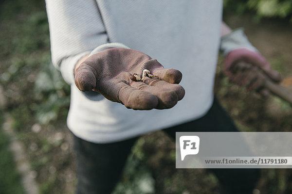 Hand der Gärtnerin mit Keimling  Nahaufnahme