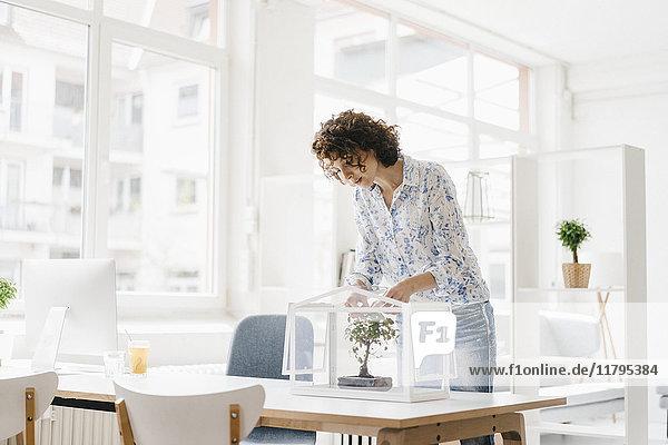 Geschäftsfrau im Büro  die sich um den Bonsaibaum kümmert.