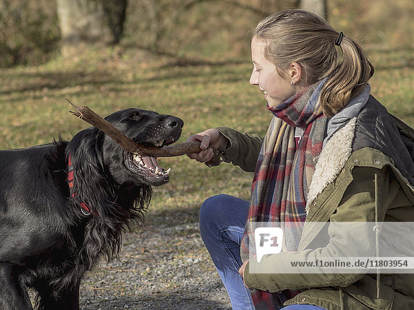 Girl playing with retriever at park