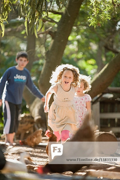 Children playing with chickens outdoors