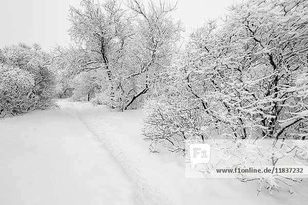 Ukraine  Dnepropetrovsk region  Dnepropetrovsk city  Snow-covered trees in park