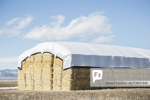 USA  Colorado  Stack of hay covered with tarpaulin
