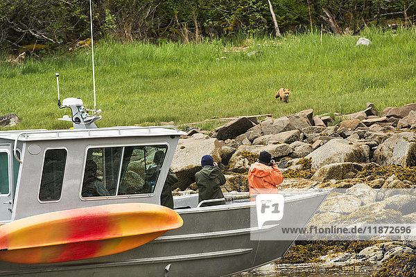 Guests at the Katmai Wilderness Lodge photograph a red fox while floating near shore in Kukak Bay  Katmai National Park & Preserve  Southwest Alaska  USA