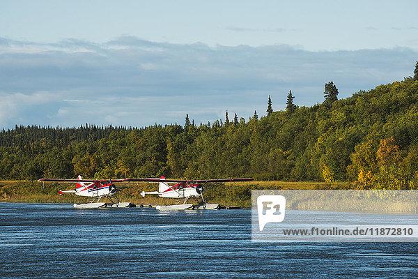 A pair of DeHavilland Beaver floatplanes moored along the Kvichak River in the Bristol Bay region  Southwest Alaska.