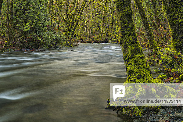 'The beautiful rainforest of Goldstream Provincial Park; British Columbia  Canada'