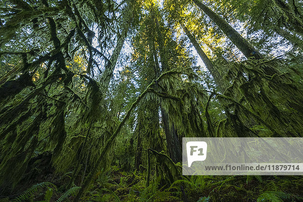 'The lush rainforest of Cathedral Grove  MacMillan Provincial Park  Vancouver Island; British Columbia  Canada'