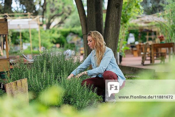 Junge Frau pflegt Pflanzen im Stadtgarten