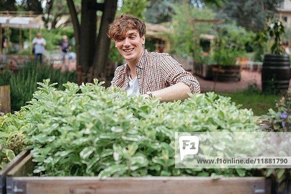 Junger Mann kümmert sich um Pflanzen  die im hölzernen Trog wachsen