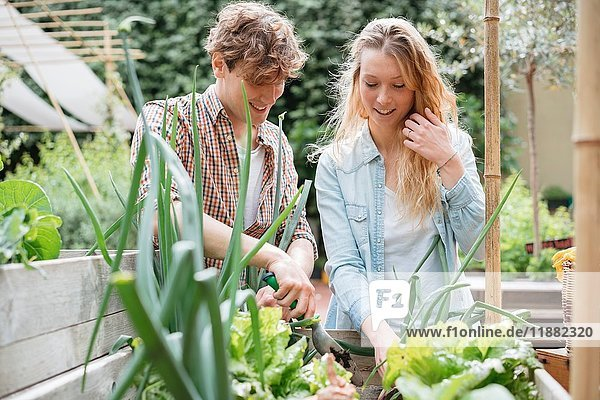 Junge Männer und Frauen pflanzen in Holztröge