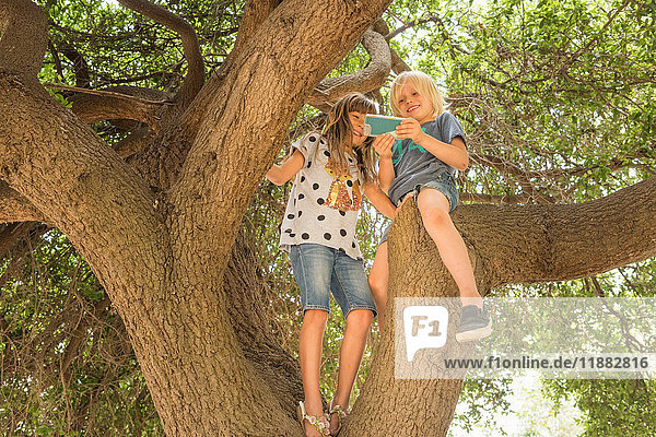 Children sitting in tree using smartphone