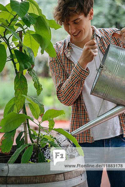 Junger Mann gießt Pflanze in Behälter  mit Gießkanne