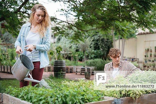 Junger Mann und Frau pflanzen in Holztröge  junge Frau gießt die Pflanzen mit der Gießkanne