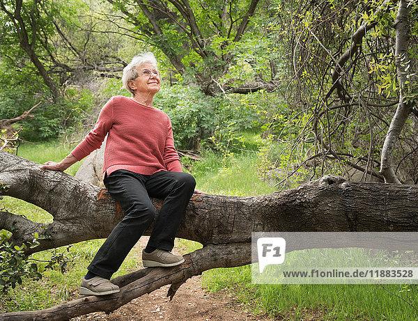 Senior woman sitting on tree trunk  Sequoia National Park  California  US