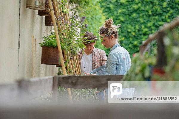 Junger Mann und Frau kümmern sich um Pflanzen  die in Dosen im städtischen Garten wachsen