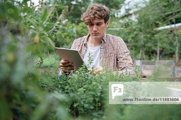 Mann im Garten benutzt digitales Tablett zur Identifizierung von Pflanzen
