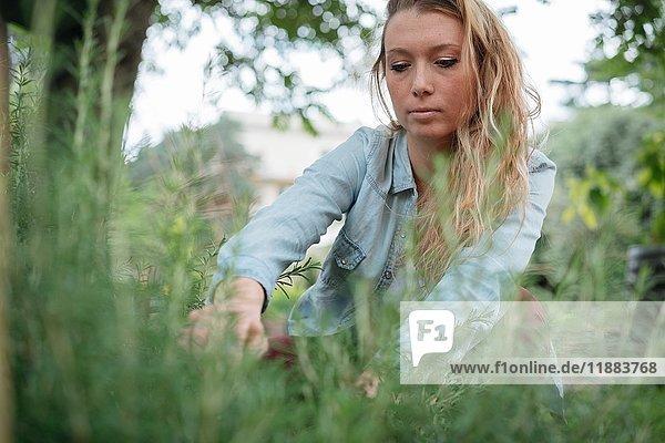 Junge Frau  die sich um Pflanzen im Garten kümmert