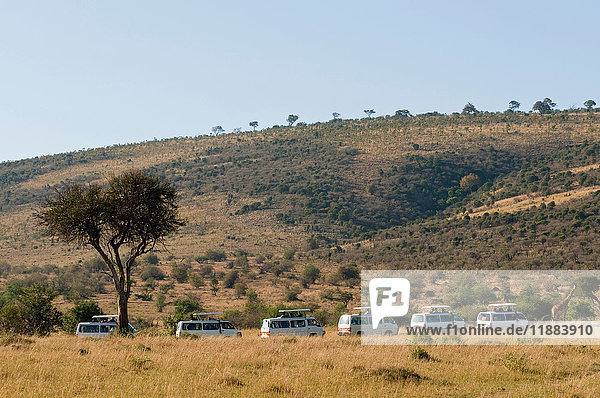 Tourists on safari  watching giraffes  Masai Mara National Reserve  Kenya