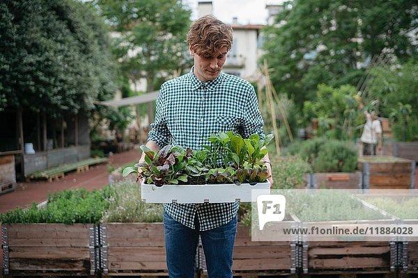 Mann im Garten hält Pflanzentablett
