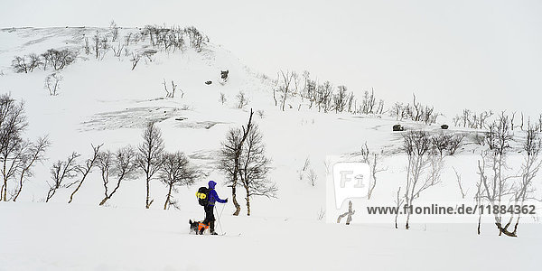 'A cross country skier and dog cross over a winter landscape; Norland  Norway'