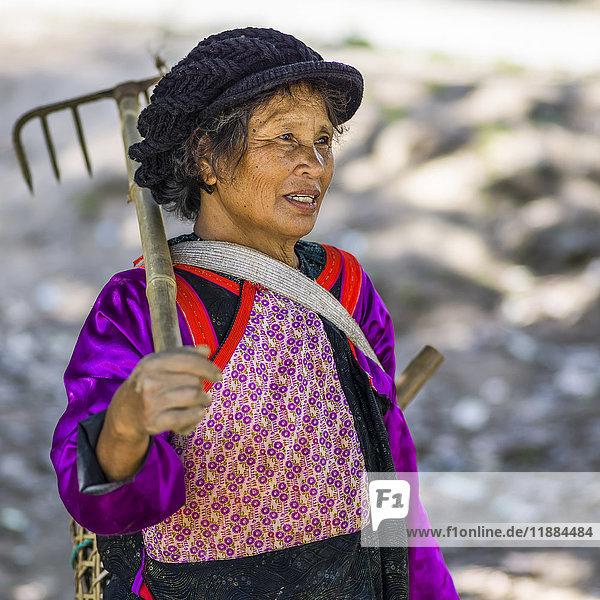 'A Thai woman carrying a rake; Tambon Pa Tueng  Chang Wat Chiang Rai  Thailand'